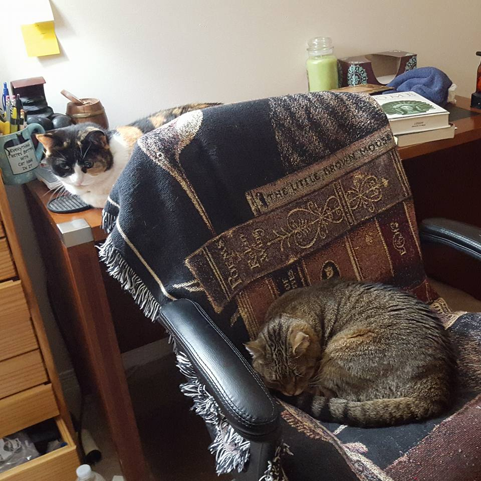 Cat Chair Picture 1