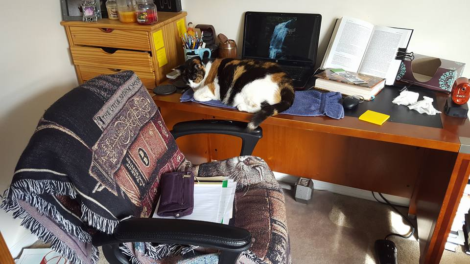 Cat Chair Picture 4